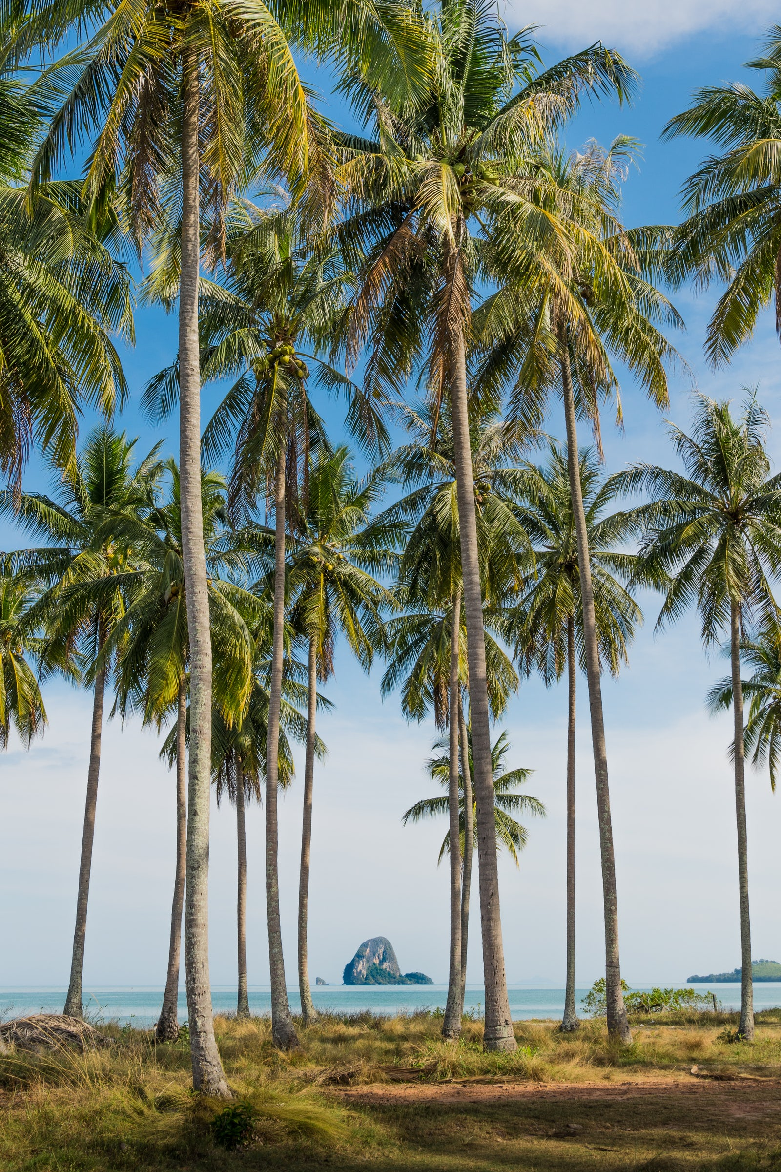 Palm trees on Koh Yao Yai
