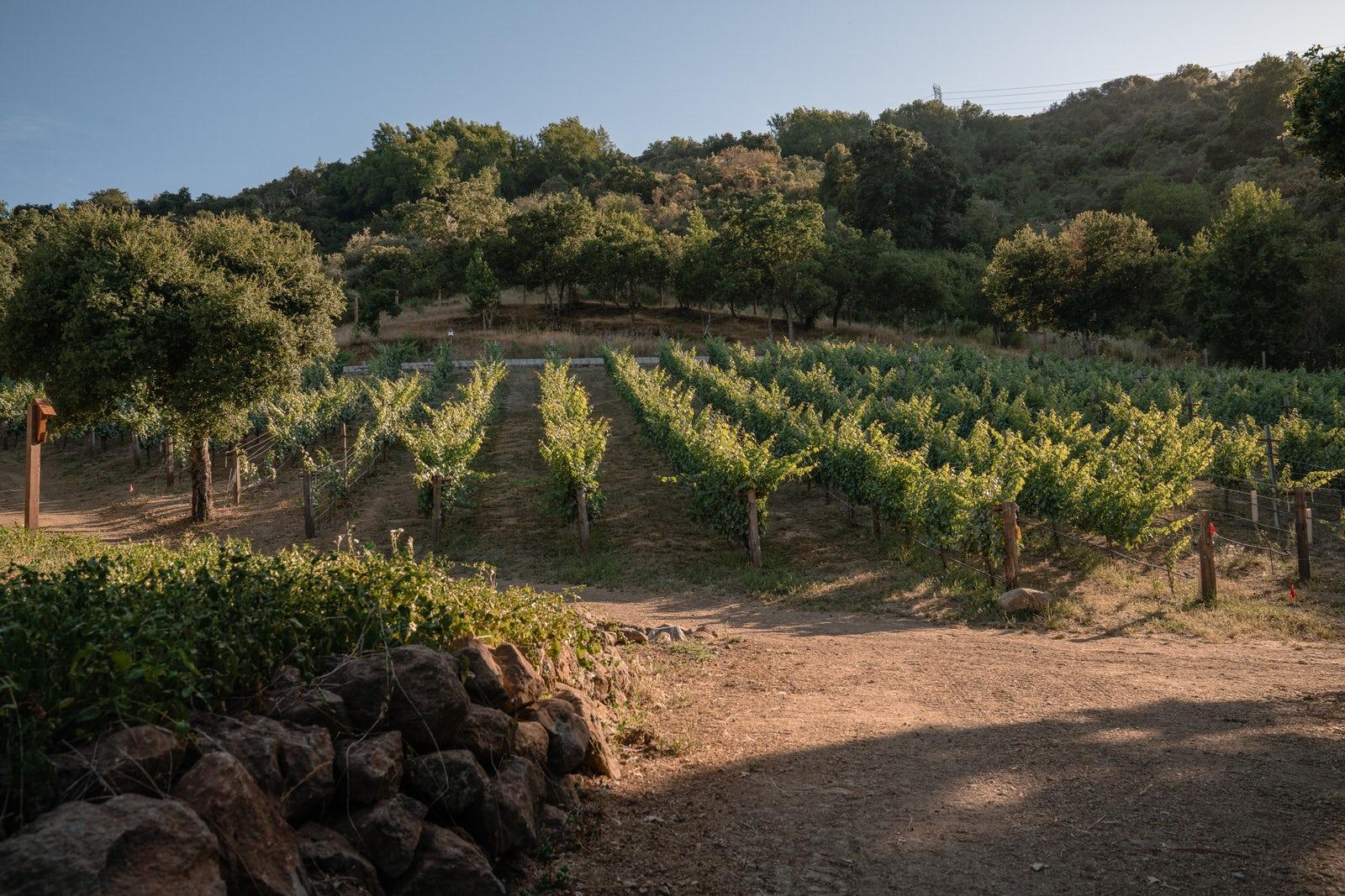 Vineyard and pathway